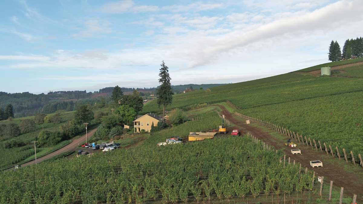 Cramoise Vineyard