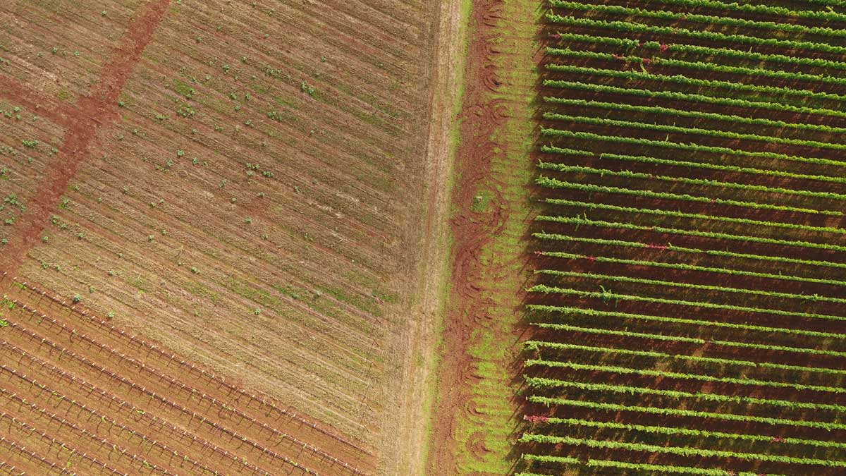 Cramoise Vineyard Field